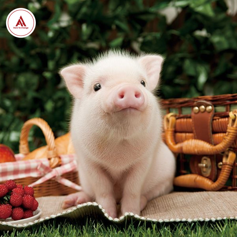 Thành ngữ tiếng anh về lợn dí dỏm - Anh ngữ Athena